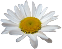cropped-margriet.png